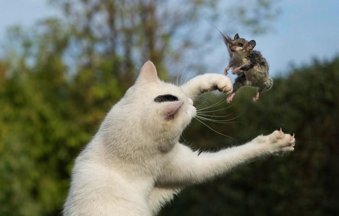 Хищники и жертвы: между жизнью и смертью. Хищники и жертвы, Борьба за выживание, Животные, Природа, Интересное, Подборка, Птицы, Видео, Длиннопост