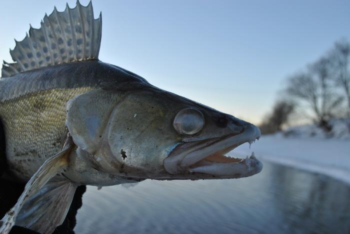 23 февраля 2019 Москва река р-н Братеево Судак, Берш, Нмр, Холодно, Рыбалка, Длиннопост