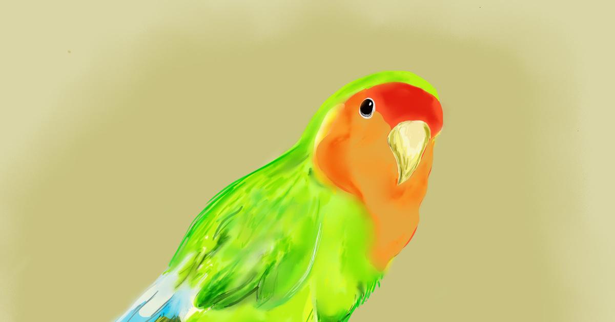 рисунок попугаев как живые фотографии можете