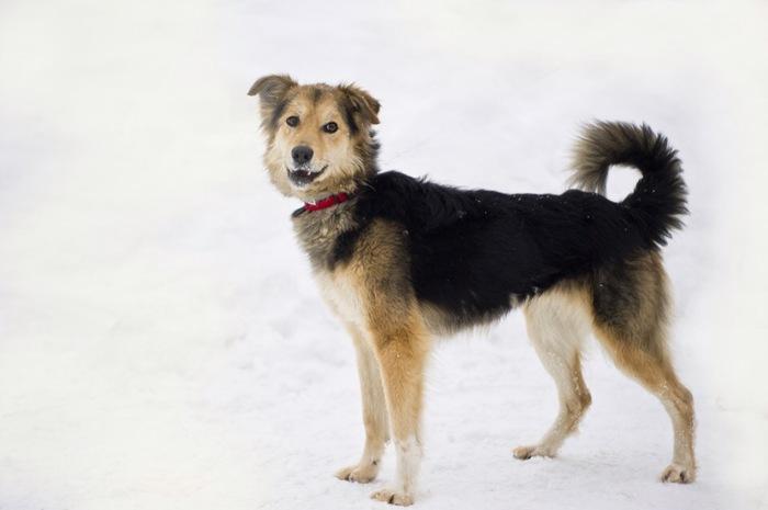 Ищет дом чудесная собачка Найда, счастье даром Собака, В дар, В добрые руки, Москва, Животные, Милые зверюшки, Длиннопост, Без рейтинга