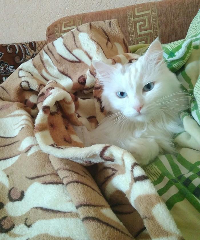Чуточку хорошего о 23 февраля 23 февраля, Праздники, Поздравление, Кот, Домашние животные