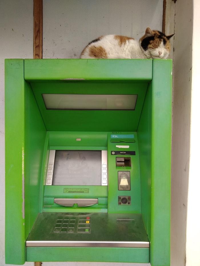 Введите пин-кот Кот, Банкомат, Милота