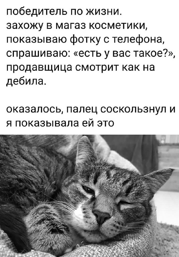 Когда в голове только котики
