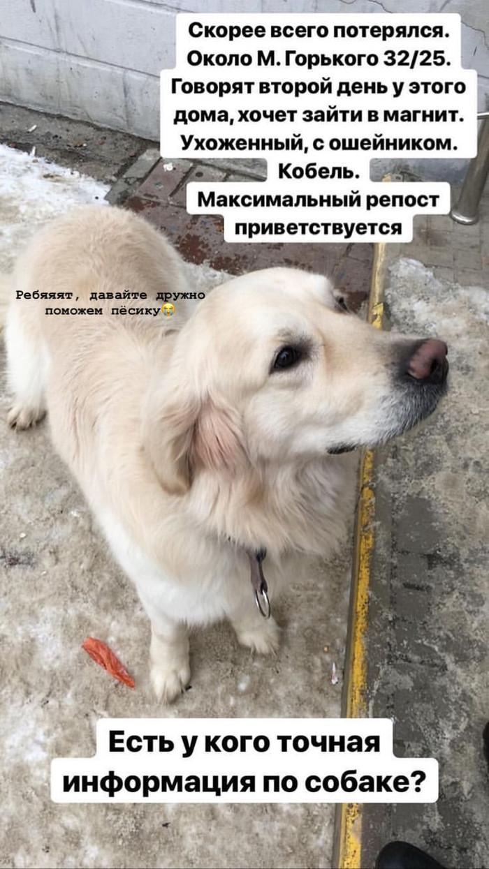 Найдена собака, Чебоксары!