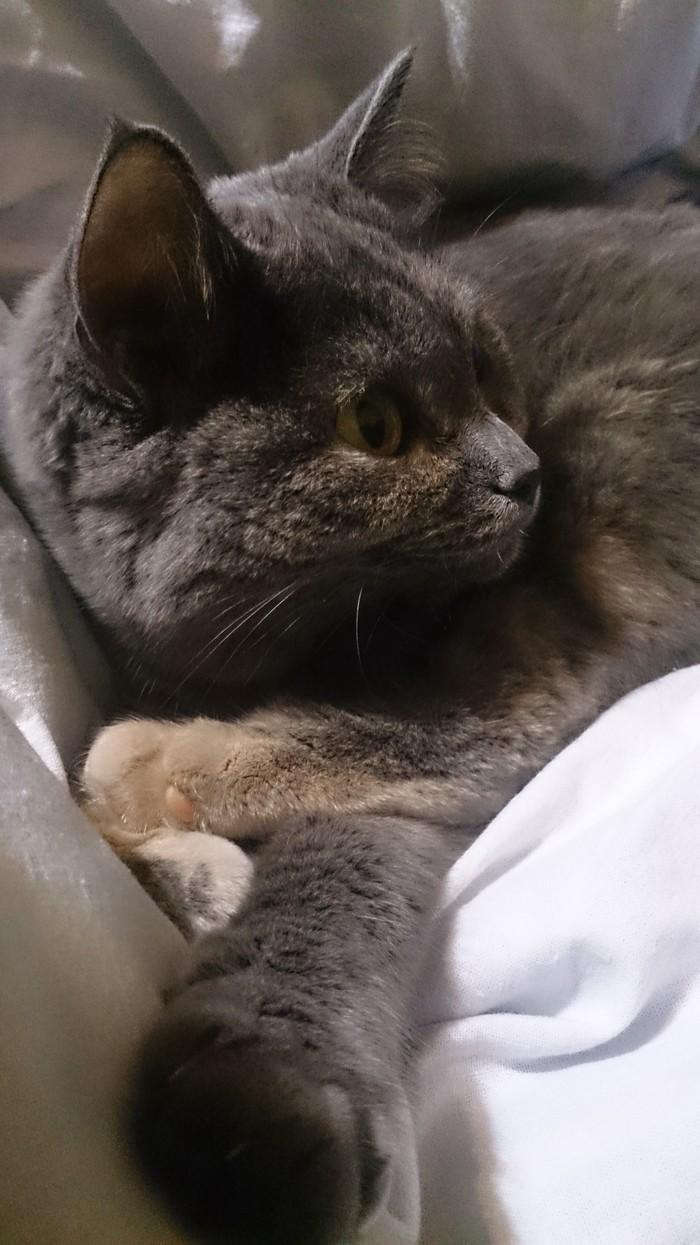 Мой типичный день с кошкой Кот, Длиннопост, Развлечения