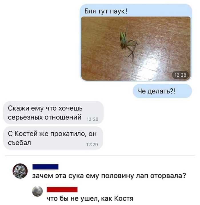 Бедный паук