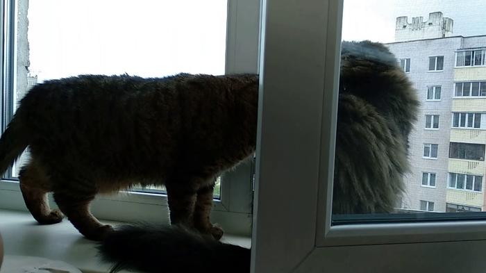 Ну что там? Вроде весна? Можно начинать орать под окнами?) Кот, Окно, Весна, Домашние животные, Животные, Питомец, Усатый-Полосатый
