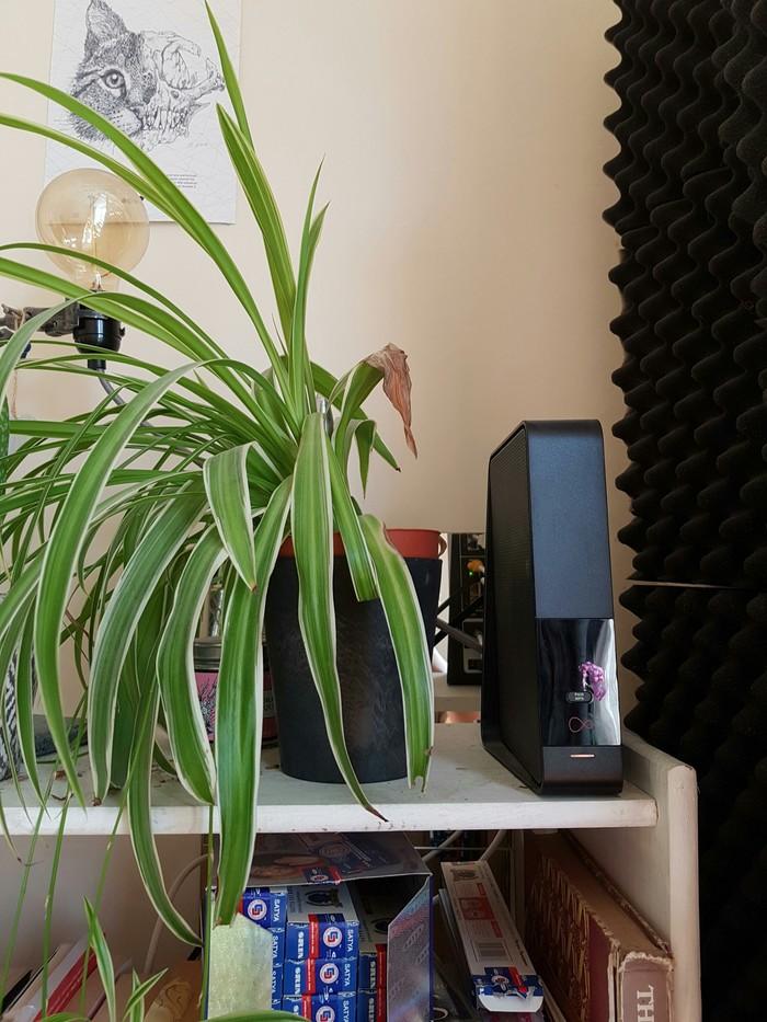 Цветок не хочет расти возле Wi-Fi роутера Reddit, Цветы, Wi-Fi