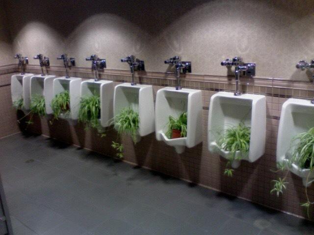 """""""Во время прогулки по отелю Disneyland, я обнаружил это» Туалет, Свежесть, Удобрения, Диснейленд, Reddit"""