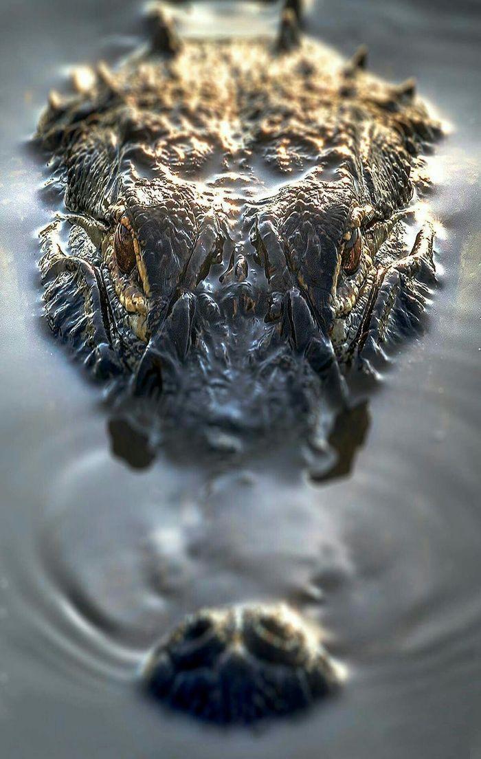 Удачный кадр Крокодил, Фотография