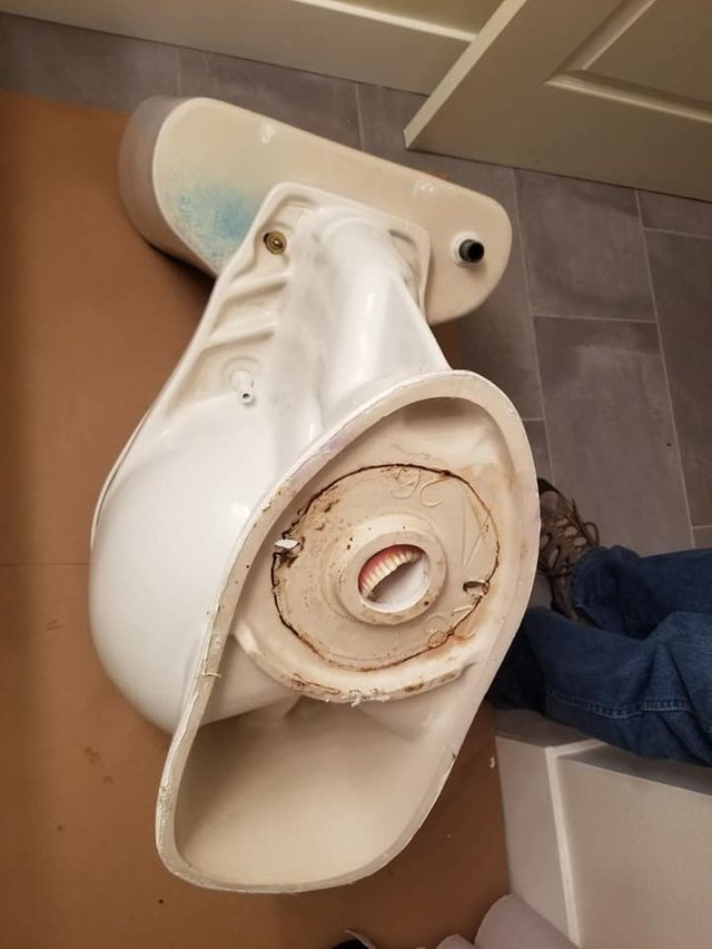 Они сказали, что унитаз плохо смывает... Засор, Туалетный юмор, Зубы, Крипота, Унитаз