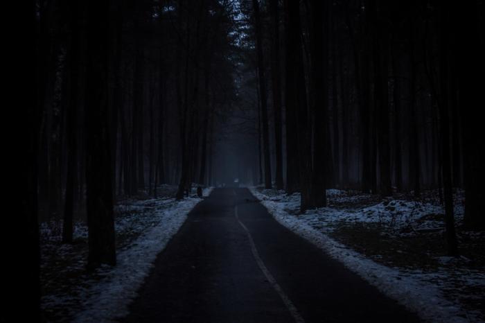 А тем временем в лесах Весна, Лес, Природа, Туман, Сумерки, Мрачное