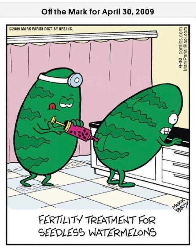 Искусственное оплодотворение у бессемянных  арбузов