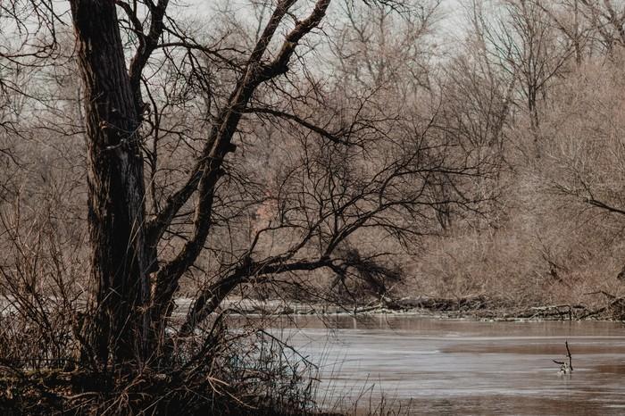 Запорожские плавни Начинающий фотограф, Лес, Природа, Запорожье, Длиннопост