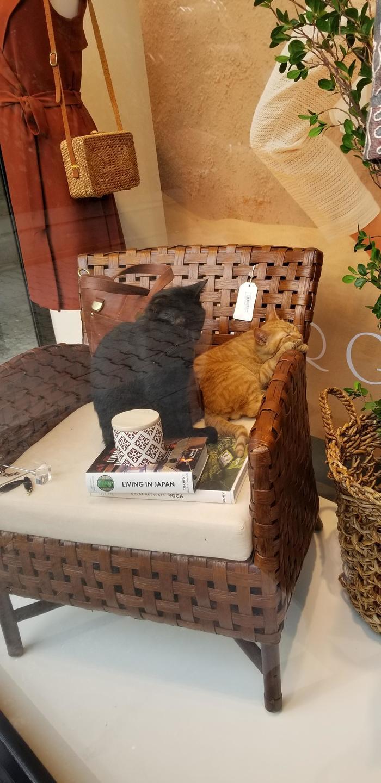 Уличных котов пустили в магазин, потому что на улице дождь. Кот, Reddit, Холод, Магазин, Домашние животные
