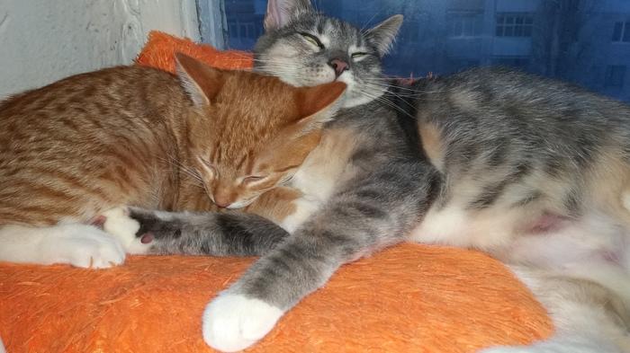 Кот нужен, чтобы его любить. (2) Кот, Барсик, Грусть, Длиннопост, Домашние животные