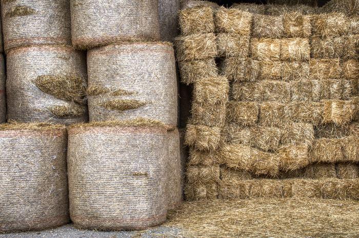 Какой доход могут принести 8 коров Длиннопост, Ферма, Молоко, Корова, Доярка, Доход