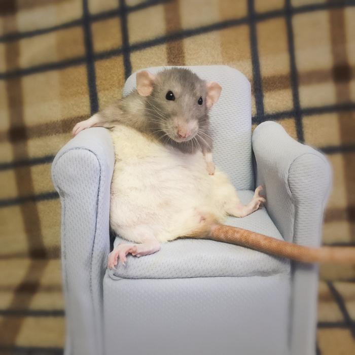 Это Пикси и у неё есть собственное креселко