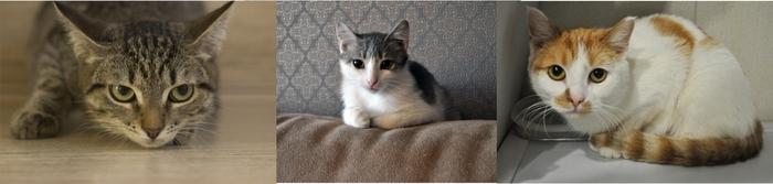 Особенные котики приюта Кот, Приют, Челябинск, Приют Три Товарища, Особенные животные, Котята, Спасение животных, Длиннопост