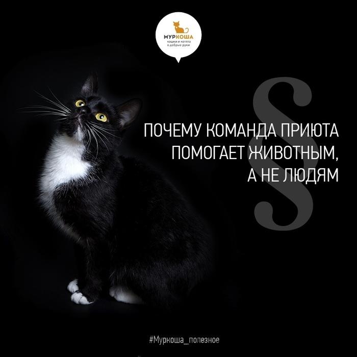 Почему команда приюта помогает животным, а не людям Приют для животных, Муркоша, Приют муркоша, Кот, Полезное, Длиннопост