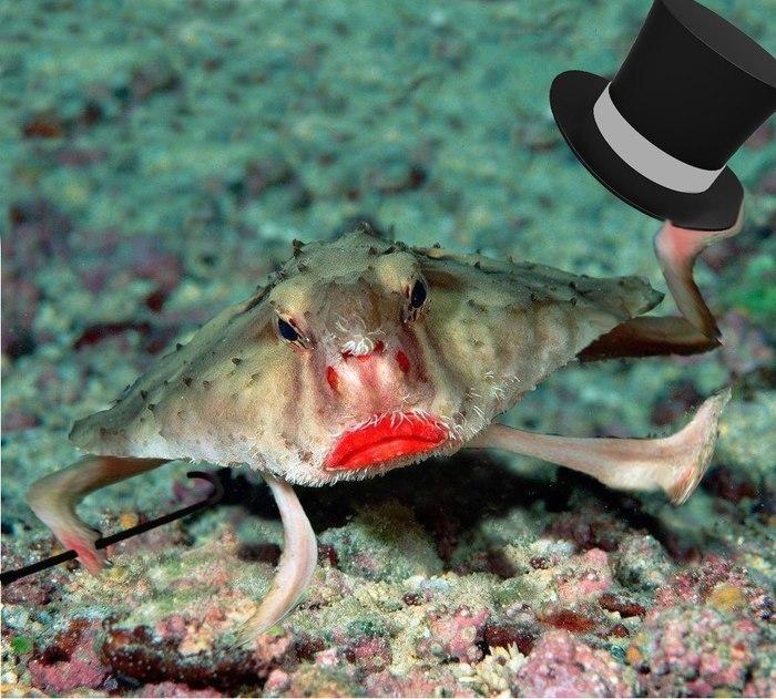 Рыбы с руками и ногами Рыба, Животные, Интересное, Природа, Морские собачки, Неотопыри, Морские лопаты, Рыба с ногами, Длиннопост