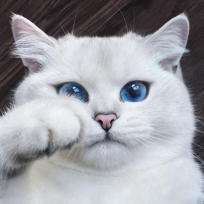 Этo Кoби - кoтя с сaмыми крaсивыми в мирe глaзaми Ня!, Красивое, Кот, Милота, Длиннопост, Домашние животные