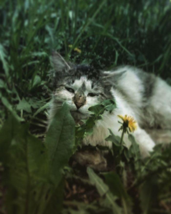 Мистер кот! Почему из русского кота вы превратились в азиатского? Что за аниме? Кот, Животные, Домашние животные, Длиннопост