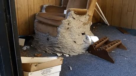 Гнездо шершней найденное под стулом в заброшенном доме