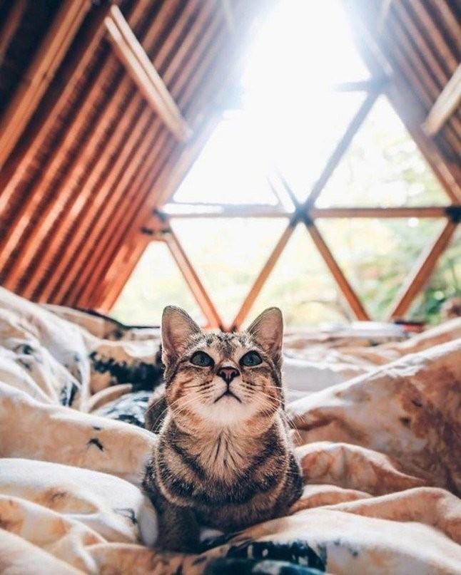 Кот в домике на Бали. А мы в зиме.