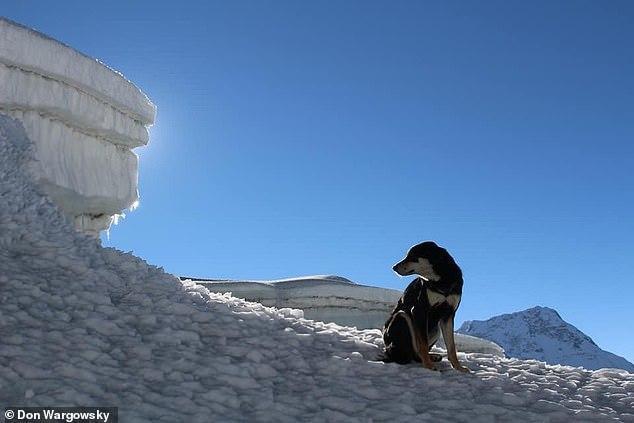 Собака подружилась с горной экспедицией в Непале и покорила вместе с ними вершину Собака, Непал, Экспедиция, Альпинизм, Дружба, Длиннопост