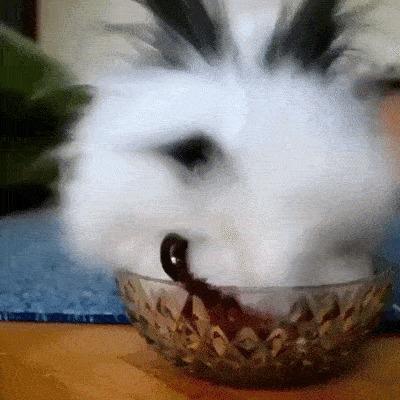 Кролик и ягоды.
