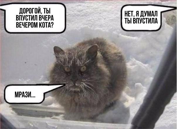 Проблема всех котов зимой