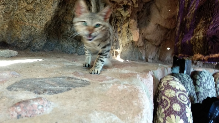 Египетские котики Египет, Кот, Видео, Длиннопост, Домашние животные