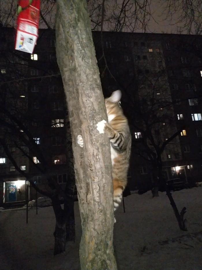 Когда твоя котейках в душе птичка Кот, Прогулка, Длиннопост, Домашние животные