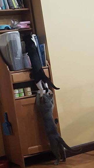 Кошачье братство Кот, Братство, Шалость удалась, Домашние животные