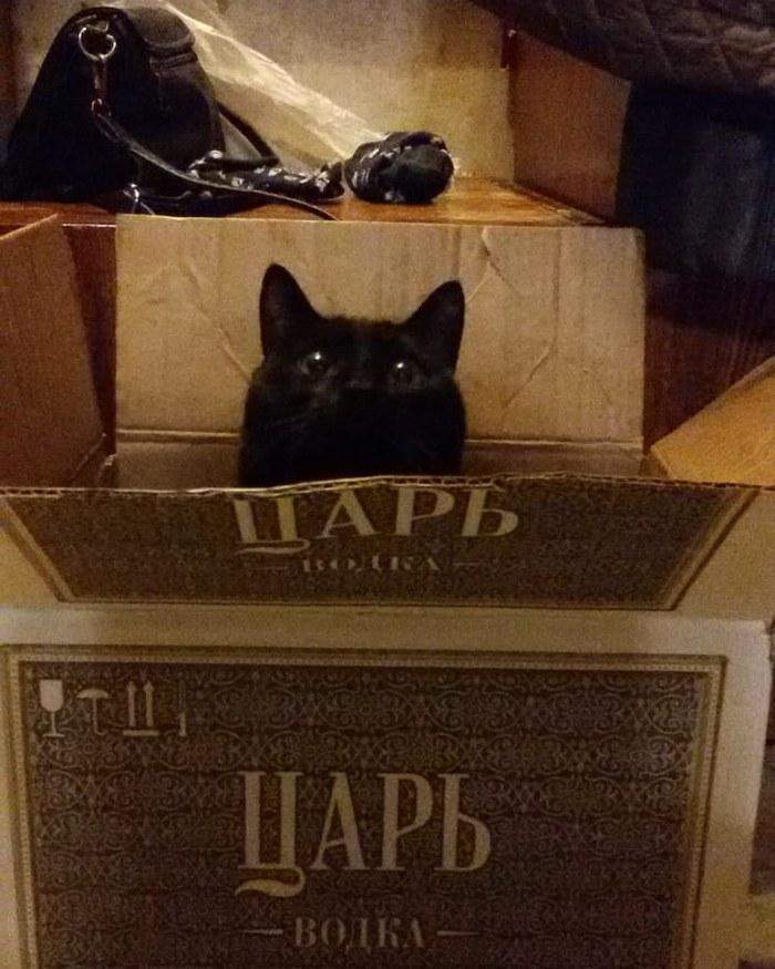 Когда наконец-то нашёл нужную коробку!