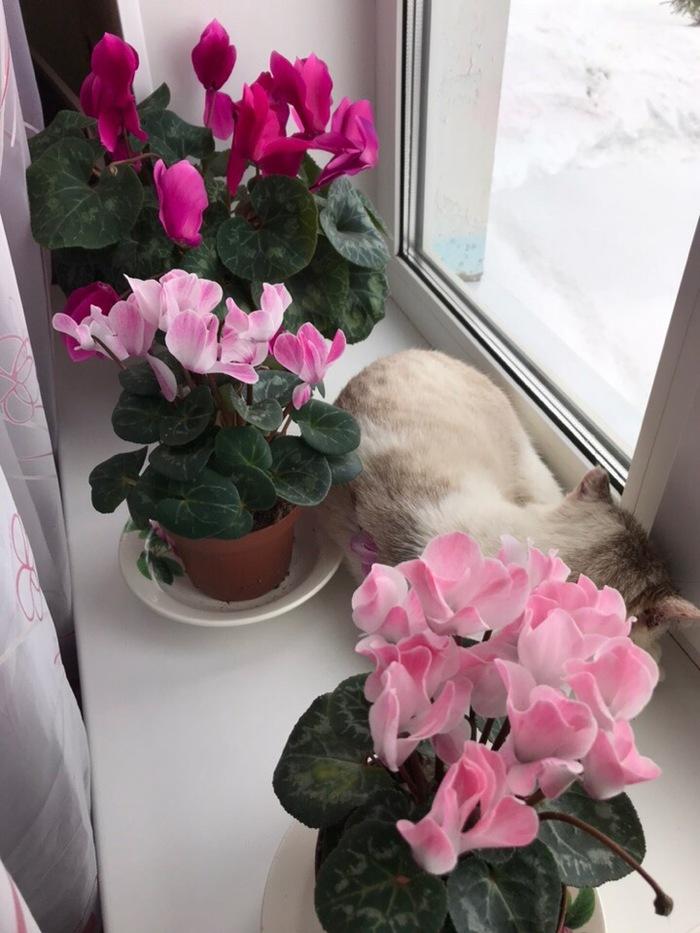 А за окном весна)