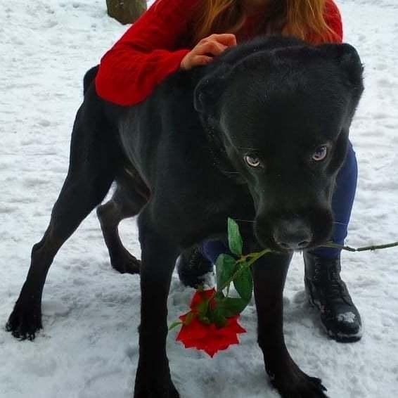 С праздником,  конечно, но цветок я не отдам!