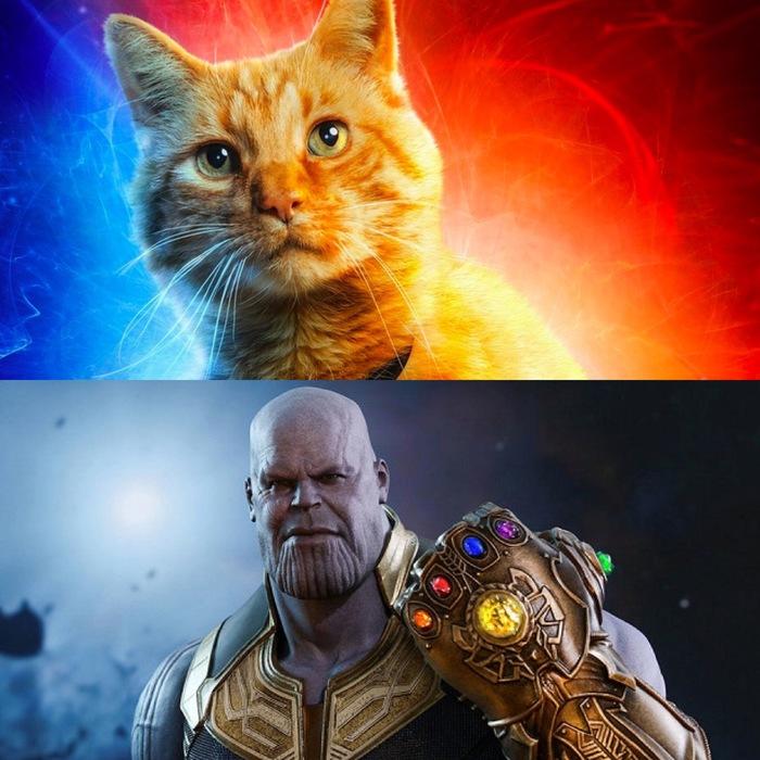 Мстители. Финал Мстители, Кот, Танос, Домашние животные