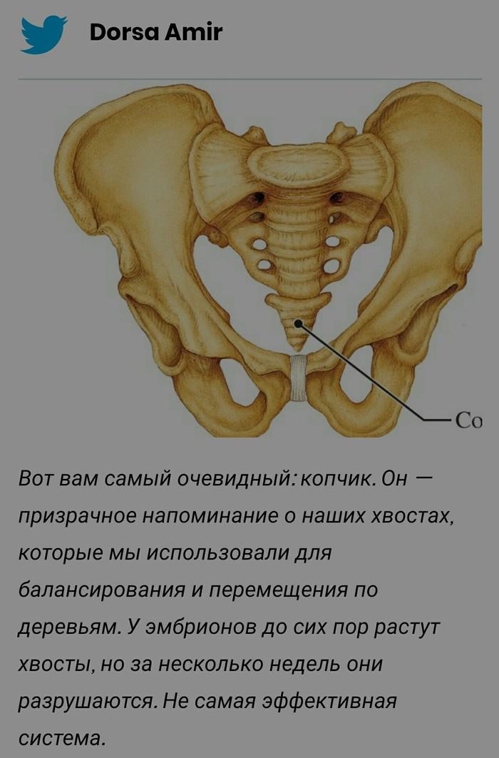 Антрополог показала, сколько в наших телах лишних органов. Из-за лени эволюции их куча, и это не только копчик Антрополигия, Наука, Эволюция, Длиннопост