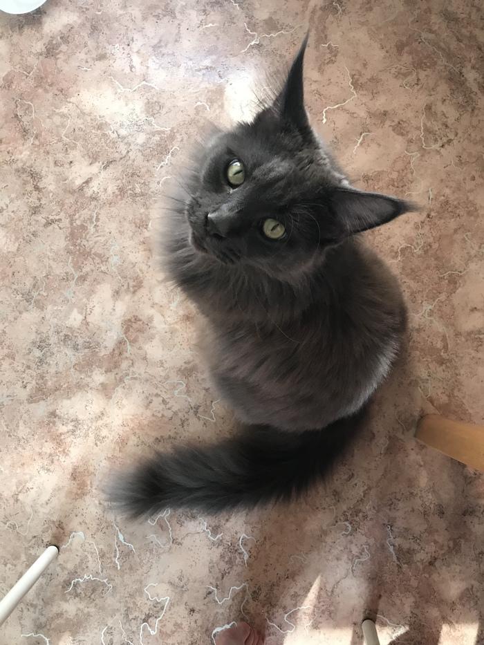 Про котов Кошкин дом, Кот, Котомафия, Длиннопост