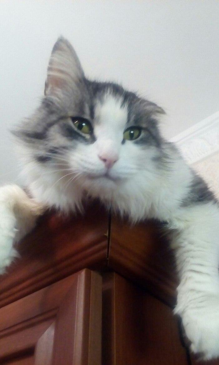 12 лет Кот, День рождения, Длиннопост, Домашние животные