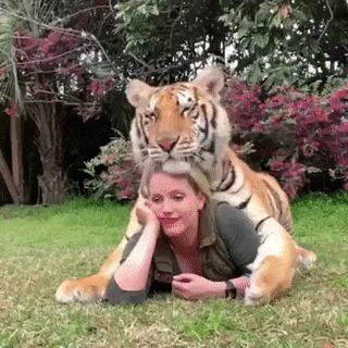 Фотосессия с большой кошкой