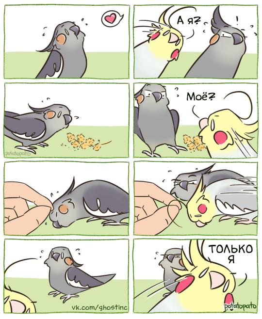 Только я Комиксы, Перевел сам, Попугай