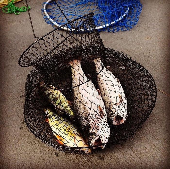 Рыбалка в штате Вашингтон по сравнению с Гавайи) Рыбалка, Рыбак, США, Вашингтон, Гавайи, Сын, Длиннопост