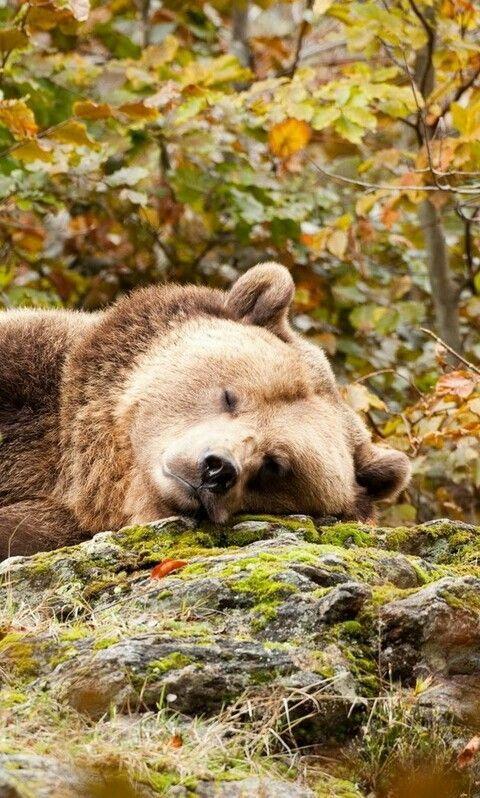 Устал? Отдохни!