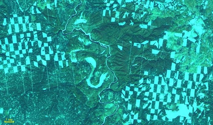 Мнение эксперта: что надо изменить в лесном хозяйстве в первую очередь? Лесной форум Гринпис, Длиннотекст, Длиннопост, Природа, Экология, Экономика в России
