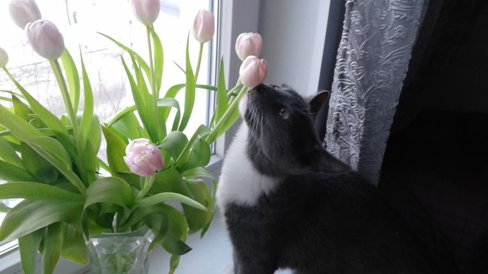 Защита на окна для кота. Кот, Окно, Москитная сетка, Лето, Домашние животные
