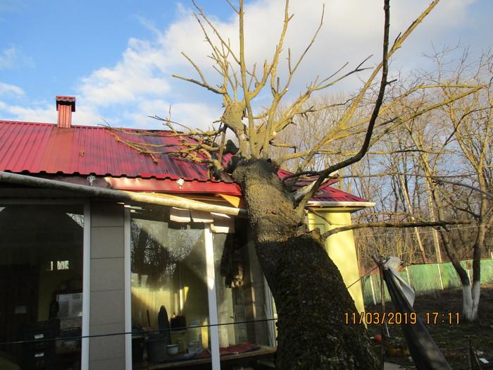 Поднимите в топ пожалуйста. Без рейтинга. На мой дом упало дерево соседа. Как его заставить заплатить за ремонт? Без рейтинга, Дерево, Повреждения, Повреждение имущества, Закон, Акт, Помощь, Юридическая помощь, Длиннопост