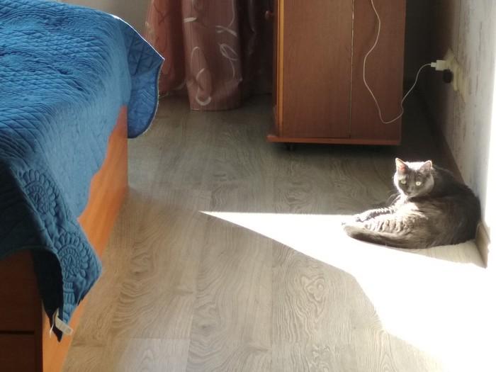 Разочарование Эгоизм, Кот, Домашние животные